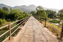 Walkway Amidst Plants And Trees Over Bridge