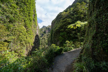 Steps And Path Between Sheer Rock And Vegetation Clad Walls Of Windy Canyon