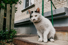 Cat With Funny Moustache As Hitler Had.