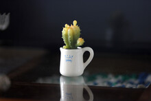 Still Life With Hyacinth Rubber Cactus Plants