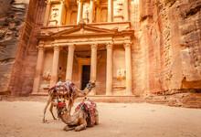 View Of Camels In Petra Jordan
