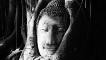 Close-up Of Old Statue Buddha On Tree Trunk