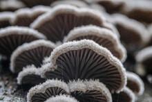 Close-up Of White Mushrooms