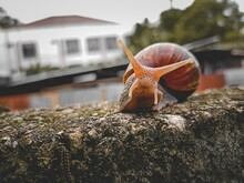 This Is A Photo Of A Snail Relaxing On A Fence.