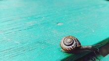 Beautiful Slow Snail