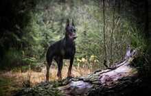 Dog Standing On Field In Forest