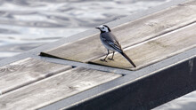 High Angle View Of Bird On Table