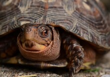 Close-up Portrait Of A Turtle