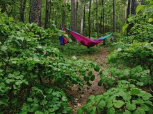 Hammock Amidst Trees In Forest