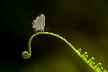 Little Butterfly On Fern
