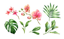 Watercolor Orchid Plant Set. Big Pink Flowers, Palm, Monstera Leaves. Hand Painted Floral Tropical Collection. Botanical Illustrations With Exotic Plants Isolated On White