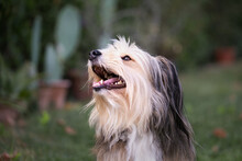 Portrait Of A Smiling Fluffy Dog Outdoor