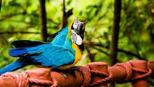 Showing Love With Beak To Beak - Singapore Bird Park, Singapore