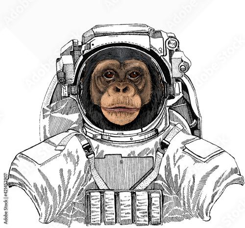 Fotografia Vector chimpanzee portrait