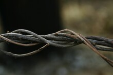 Close-up Of Twisted Stick