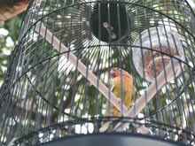 Low Angle View Of Bird Perching In Cage
