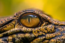 Close-up Of Crocodile Eye