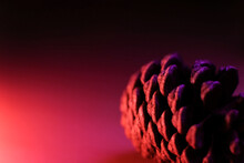Extreme Close-up Of Pine Cone Against Colored Background