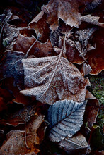Close-up Of Dry Leaves On Snow Covered Field