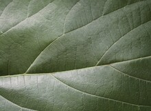 Green Leaf Texture,nature Background