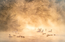 Ducks And Swans Swimming In Lake During Foggy Weather