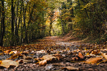 Surface Level Of Forest Road In Autumn, Leaves, Foliage, Nature, Outdoors.