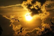 Silhouette Birds Flying In Sky During Sunset