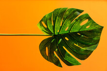 Close-up Of Exotic Leaf On Yellow Background