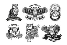 Black Label Designs With Owls Vector Illustration Set. Vintage Badges With Flying Night Owl Or Eagle-owl. Birds And Forest Animals Concept Can Be Used For Retro Template, Banner Or Poster