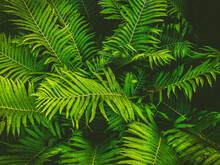 High Angle View Of Fern Leaves On Plant