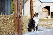 Cat Sitting In Front Of Hay