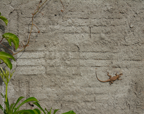 Small lizard on a brick wall and thick plaster Fototapeta