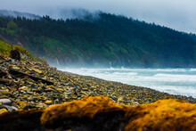 Oregon - Where The Forest Meets The Sea