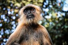Monkey Thinking About Life