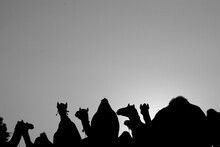 Silhouette Camel Against Clear Sky