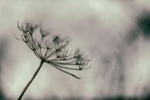 Seedhead Silhouette