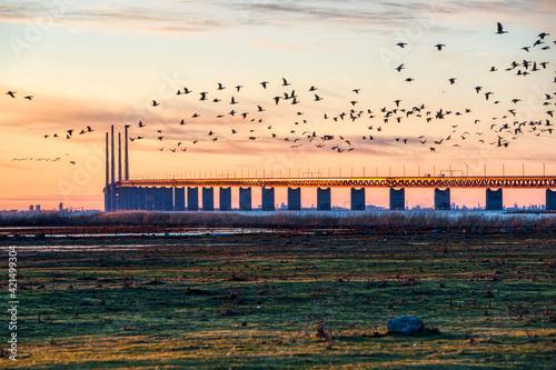 Oresund Bridge sundown with a flock of flying birds crossing the scene by the sea Fototapet