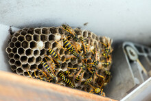 High Angle View Of Wasp Nest