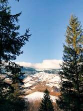 Scenic View Of Pine Trees Against Sky During Winter