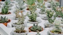 Full Frame Shot Of Succulent Plants For Sale At Market