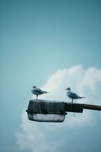 View Of Seagull Perching On City Lamp