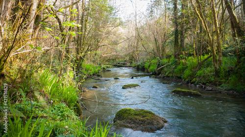 Bosque junto a arroyo en Asturias