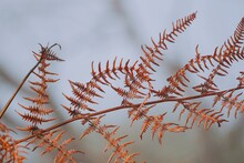 Abstract Brown Fern Plant Leaves In The Nature