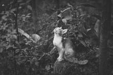 Cat Looking Up Inside A Bush