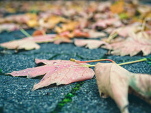 Close-up Of Autumn Leaf On Street