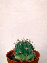 Close-up Of Potted Cactus Plant Against Wall