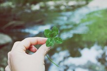 Close-up Of Hand Holding Four Leaf Clover