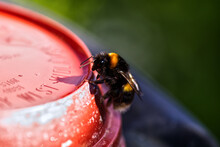 Close-up Of Bee On Red Pot