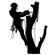 Tree Surgeon Sawing A Tree