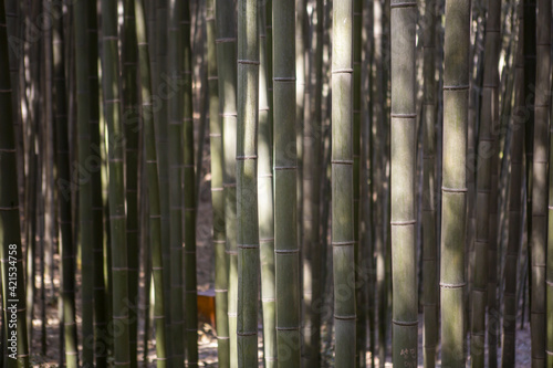 Papel de parede Closeup shot of bamboos with sunlight on it